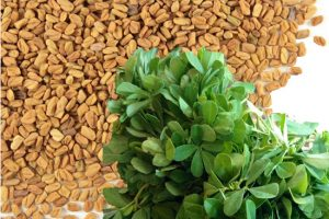 Thermostable extract of fenugreek seeds functions as a longevity promoter