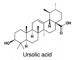 The Chemical structure of Ursolic acid found in apples, basil, bilberries, cranberries, elder flower, peppermint, rosemary, lavender, oregano, thyme, hawthorn, and prunes