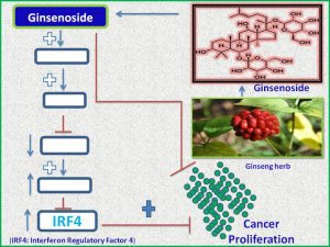ginsenoside-increases-the-expression-of-irf4