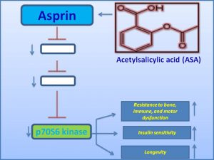 asprin-inhibits-p70-s6-kinase-expression-and-extends-lifespan
