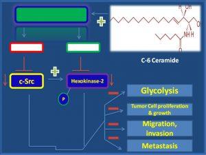 C6 Ceramide inhibits cSrc and hexokinase proliferation