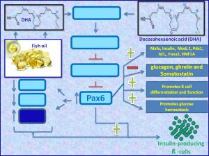 DHA suppresses insulin resistance by inducing PAX6