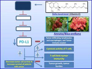 delta-tocotrienol-a-form-of-vitamin-e-inhibits-pdl1-expression
