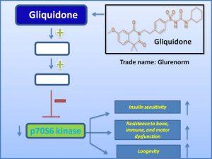 Gliquidone inhibits p70S6 kinase and extends mammalian lifespan