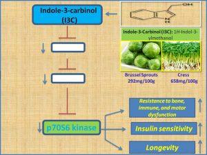 indole3carbionol-promotes-longevity-by-suppressing-p70s6-kinase