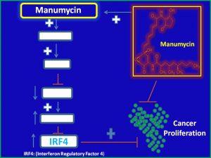 Manumycin suppresses IRF4 expression