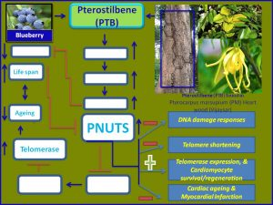 Pterostilbene increases PNUTS expression and prevents myocardial infarction