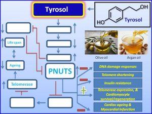 Tyrosol induces PNUTS