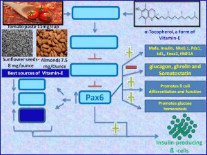 Vitamin e induces Pax6 expression