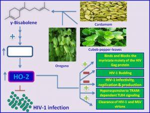 γ-Bisabolene inhibits HIV-1