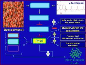 γ-Tocotrienolinduces Pax6 expression