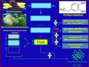 4Ethyl alcohol induces Pax6 expression