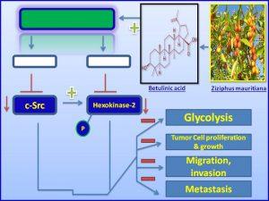 Betulinic acid inhibits c-src