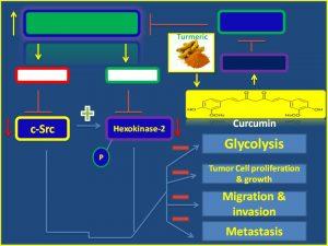 Curcumin inhibits cSrc and hexokinase2 expression