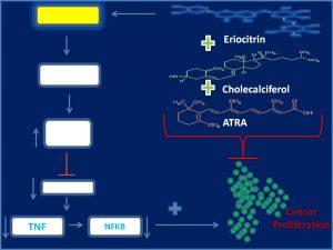 Eriocitrin, ATRA and Cholecalciferol inhibit CHD1 expression