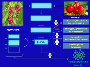 Howthorn induces Pax6 expression