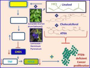 Linalool plus vitamins inhibit CHD1