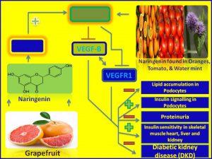 Naringenin inhibits the progression of DKD