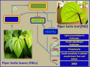 Piper betle leaves inhibit DKD