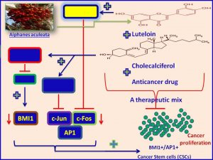 A therapeutic mix encompassing Luteolin, Cholecalciferol and a standard anticancer drug inhibits oncoproteins BMI1 and AP1 expression