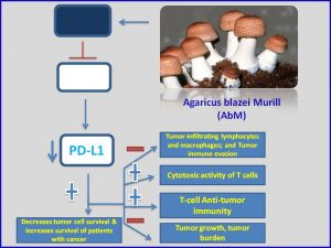 Agaricus blazei Murill (AbM) inhibits PDL1 expression to promote tumor regression
