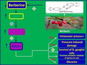 Berberine enhances NAD levels and improves glucoma