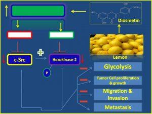 Diosmetin inhibits cSrc and hexokinase2 expression
