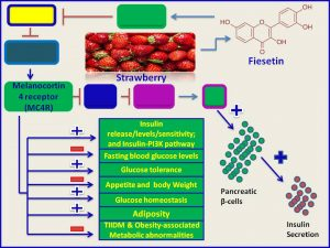 Fisetin increases LCN2 expression and promotes insulin secretion