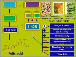 Folic acid induces Lin28 expression and promotes insulin sensitivity
