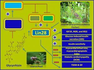 Glycyrrhizin (Glycyrrhizic Acid) promotes insulin secretion