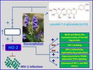 Luteolin inhibits HIV1 expression