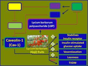 Lycium barbarum polysaccharide(LBP) induces Cav1 expression and promotes insulin sensitivity