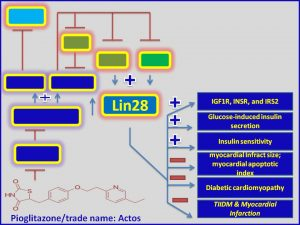 Pioglitazone increases lin-28 expression