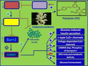Polydatin induces Barr2 and CAMKII expression