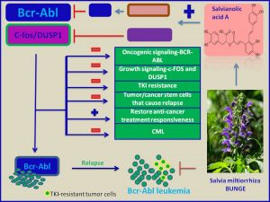 Salvianolic acid A inhibits c-fos and DUSP1 expression and erradicates CML