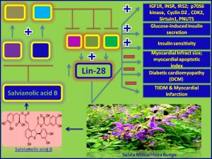 Salvianolic acid B induces Lin28 expression and promotes insulin sensitivity