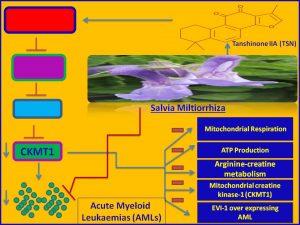 TanshinoneIIA (TSN) inhibits AML