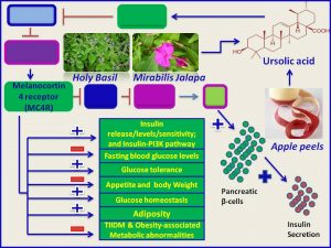 Ursolic acid inhibits apetite and promotes insulin secretion