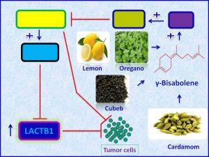 gamma-bisabolene induces LACTB1 expression and inhibits tumors progression