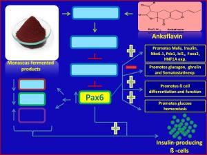 Ankaflavin increases Pax6 expression and promotes insulin sensitivity