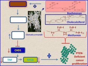Boehmenan, cholecalciferol and metformin inhibit CHD1 expression