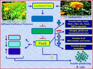 Carthami flos extract inducs Pax6 and promotes insulin sensitiivity