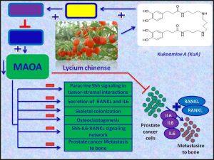 Kukoamine A (KuA) inhibits MAOA expression