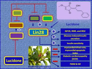 Lucidone induces LIn28 expression and promotes insulin sensisitiivity