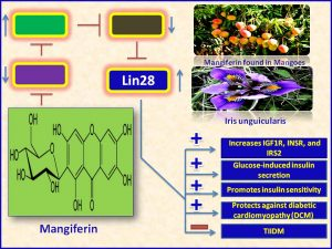 Mangiferin induces Lin28 expresison and promotes insulin sensitivity