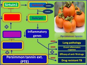 PTE induces Sirtuin1 exp and inhibtis TB pathogenesis