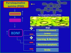 Pyrroloquinoline induces BDNF expression and inhibits stroke