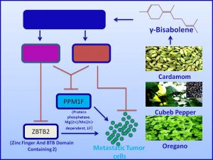 gamma-bisobolene inhibits the expression of metastatic promoter PPMIF