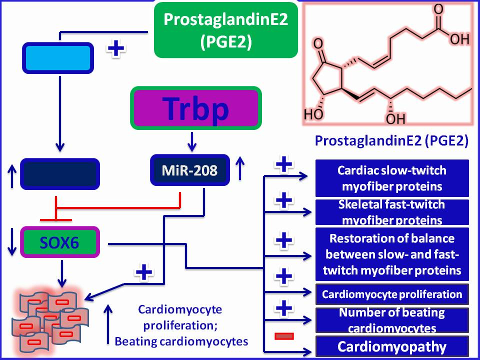 Steroid-based therapy for Cardiomyopathy: ProstaglandinE2