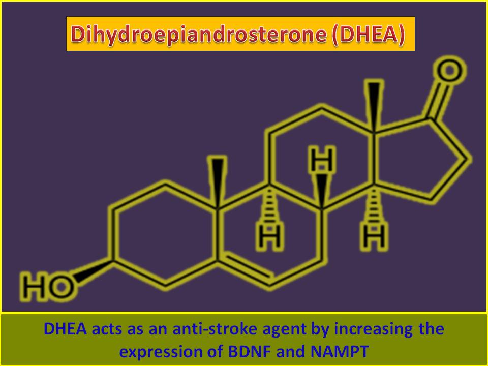 Molecular therapy for Stroke: Dehydroepiandrosterone (DHEA